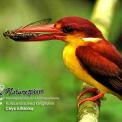 Birdwatching thumbnail
